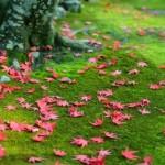 Rychlé tipy pro podzimní údržbu zahrady