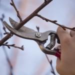 Vybíráme ruční zahradní nůžky