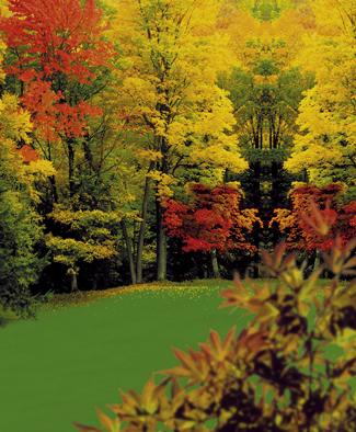 3 tipy na podzimní trávníková hnojiva
