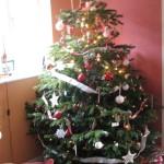 Živý vánoční stromek v květináči? Ano jde to, ale…