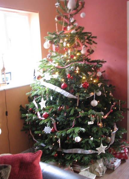 vánoční strom - jedle