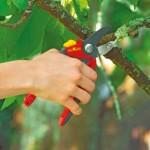 Jak a čím prořezat ovocné stromy