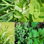 Vytvořte si bylinkovou zahradu u vás doma