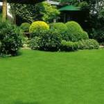 Projektujeme zahrady