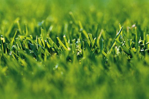 3 tipy pro výživu trávníku při výsevu