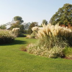 Okrasné trávy a traviny