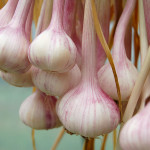 Zelenina bojující proti chřipce a nachlazení