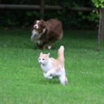 Jak chránit psy při postřiku trávníku