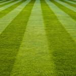 Jak na vzorované trávníky