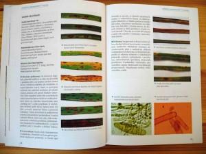 Trávníky Ochrana proti chorobám, škůdcům, plevelům a abiotickému poškození