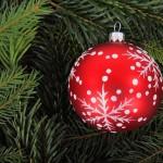 Živý vánoční strom