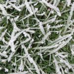 Trávník v zimním období