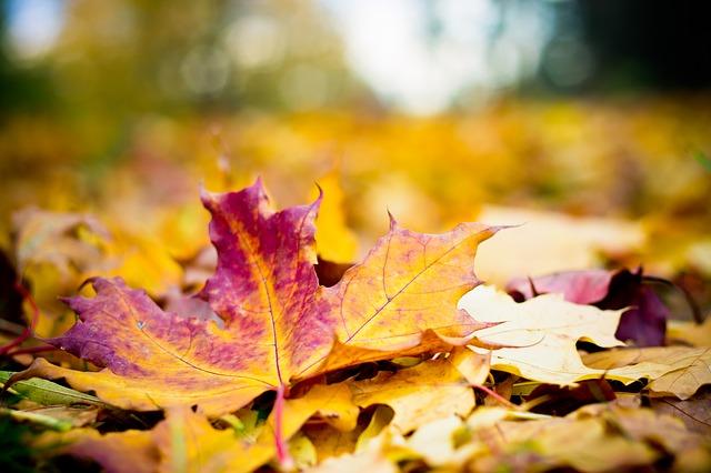 Podzimní výživa okrasných rostlin a dřevin