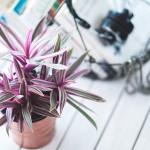 Péče o pokojové rostliny v zimních měsících