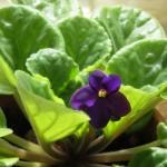 Výživa a hnojení pokojových rostlin