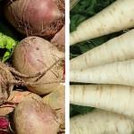 Pěstujeme kořenovou zeleninu – petržel a červená řepa