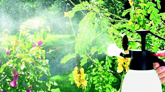 Pozor při aplikaci postřiků na zahradě