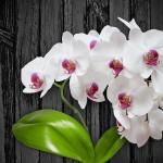 Co nejvíce vadí domácím rostlinám? Několik tipů pro pokojové rostliny.