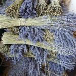 Čas sklizně a sušení bylinek