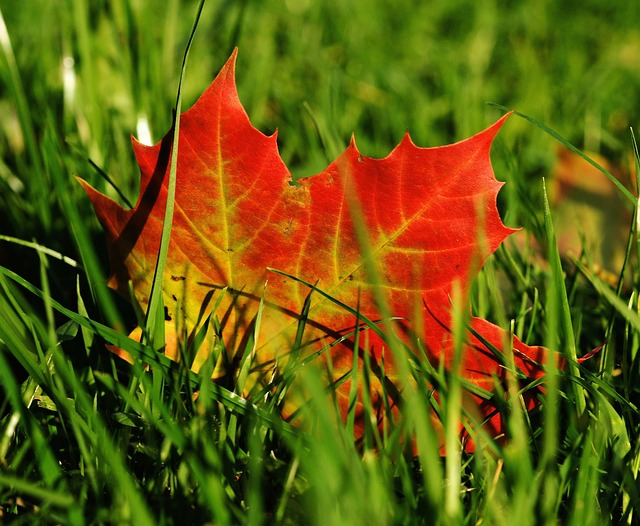 Podzimní údržba trávníku – připravte trávník na dobré přezimování