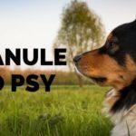 Jak vybrat nejlepší granule pro vašeho psa