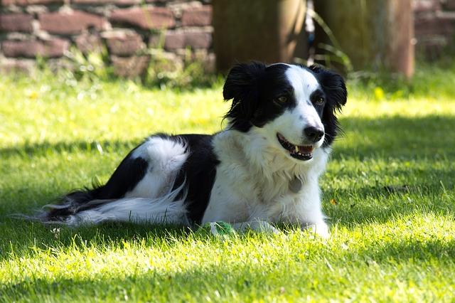 Péče o psa v letních měsících