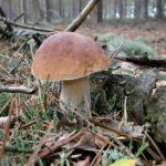 Jak uskladnit houby, aby co nejdéle vydržely