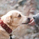 Výhody za studena lisovaných granulí pro psy