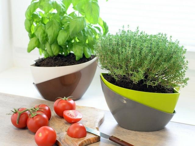 3 tipy pro domácí pěstování bylinek