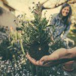 Jaké listnaté dřeviny se hodí pro zpevnění a ozelenění svahů
