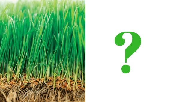 Za jak dlouho vzejde nový trávník?