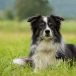 5 důvodů, proč jsou masáže a fitness pro psa prospěšné