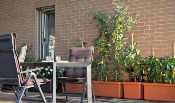 5 tipů pro jedlý balkón – zahrada na balkóně