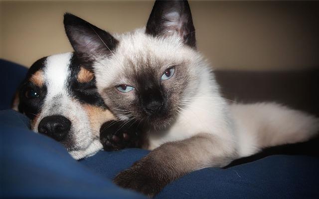 pojištění psů a koček