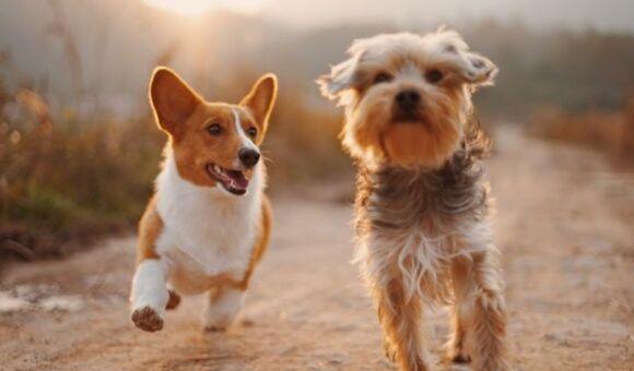Povinné čipování psů od příštího roku. Víte, co vám ukládá zákon?