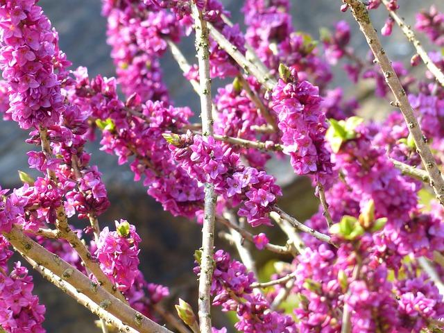 Jedovaté zahradní rostliny ‒ nebezpečná přehlídka barev a tvarů