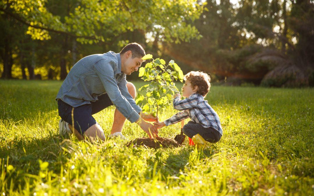 Jarní výsadba stromů